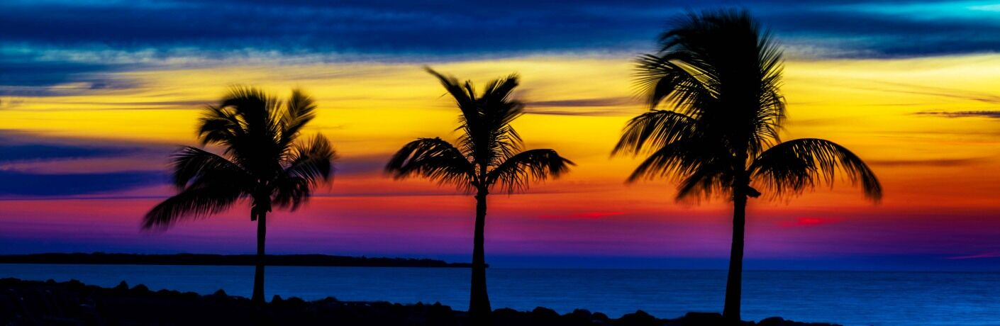 The silhouette of three palm trees at sunset