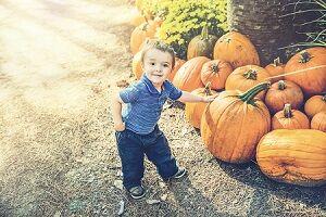 Family Fun Pumpkin Picking