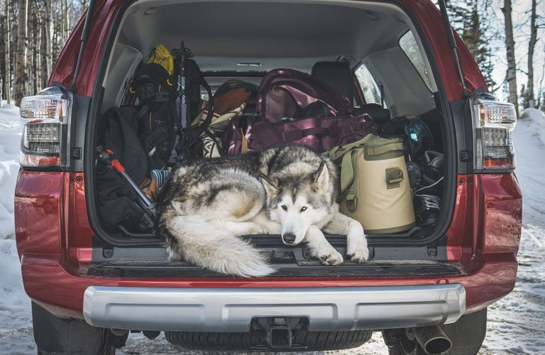 A dog and storage items in the cargo area of a red 2020 Toyota 4Runner