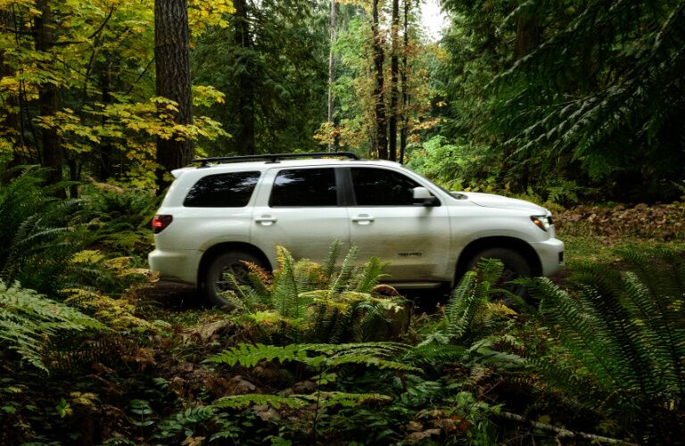 White 2020 Toyota Sequoia driving through a forest