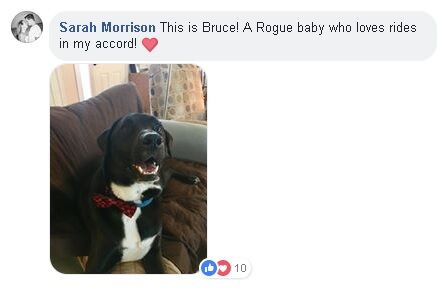 "dog named Bruce with text saying ""Sarah Morrison. This is Bruce! A Rogue baby who loves rides in my accord!"""