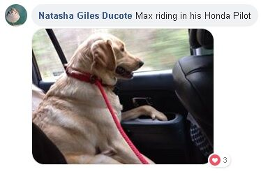 "Picture of dog named Max with text saying, ""Natasha Giles Ducote. Max riding in his Honda Pilot"""