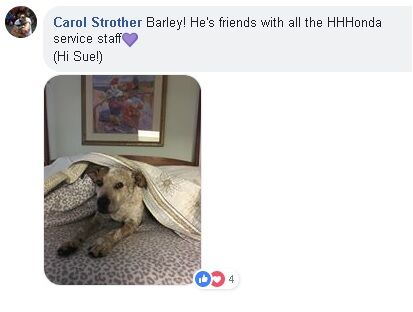"picture of dog named Barley with text saying ""Carol Strother Barley! He's friend with all the HHHonda service staff (Hi Sue!)"