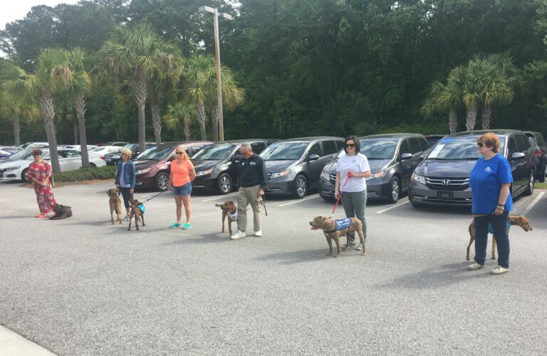 dog contest lineup in car dealership parking lot