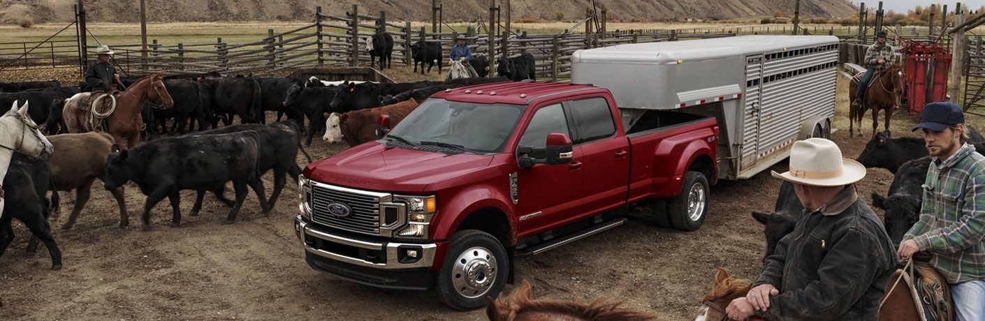 2020 Ford F-450 Super Duty parked by cows