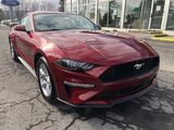 2019 Ford Mustang EcoBoost Video